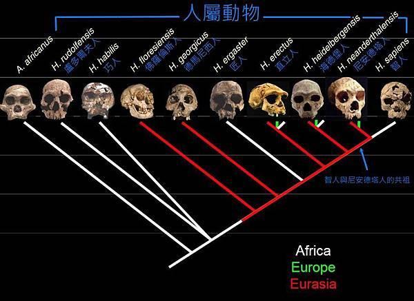 人類演化分枝