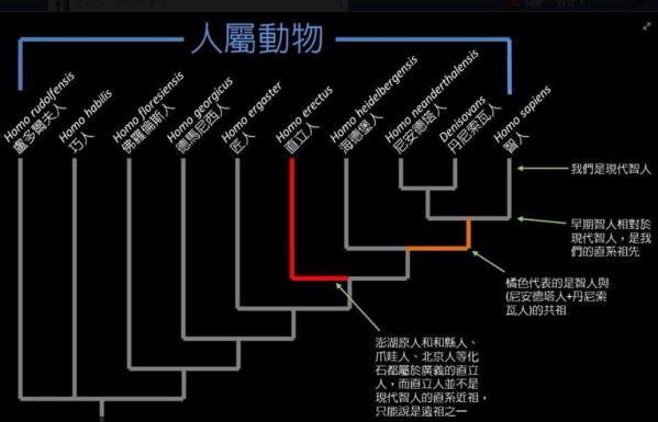 人類的祖先