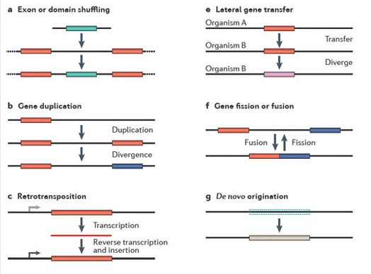 new gene originations