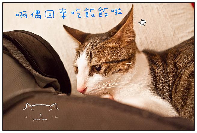 IMG_4274.jpg