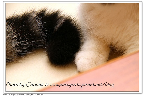 IMG_6136.jpg