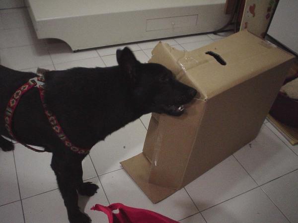 喔!是我最愛的紙箱