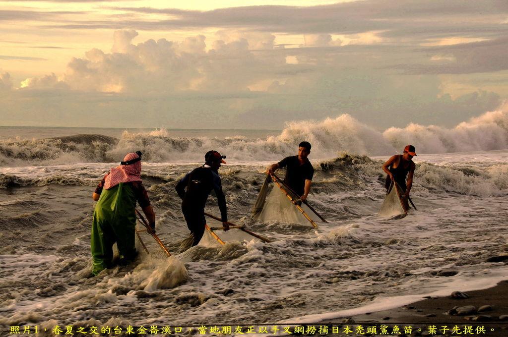 撈魚苗-葉子先-2012-09-22-DSC_9690-字