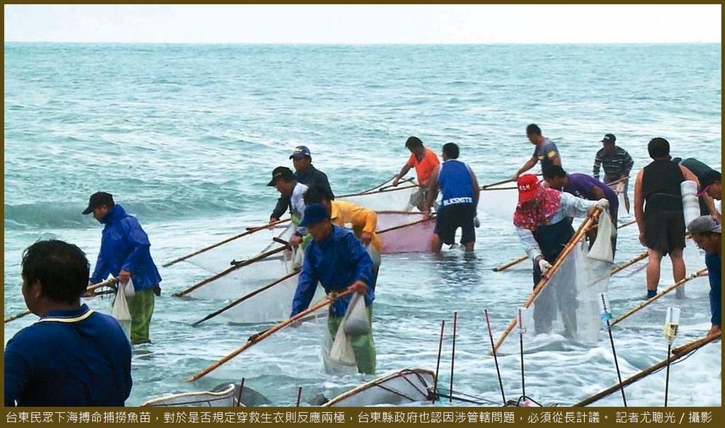 台東撈魚苗.PNG