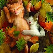 Autumn Nap
