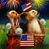 Yankee Doodle Pups