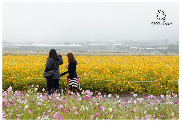 1106_花海_42.jpg