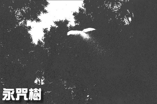 155b30454c74fc-永咒樹10_jpg.jpg