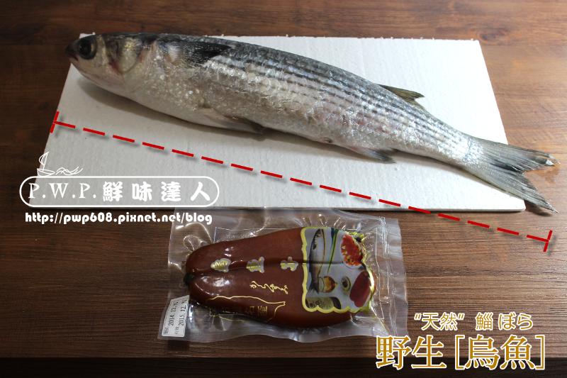 野生烏魚 (4).png