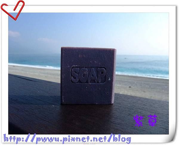 紫草.jpg