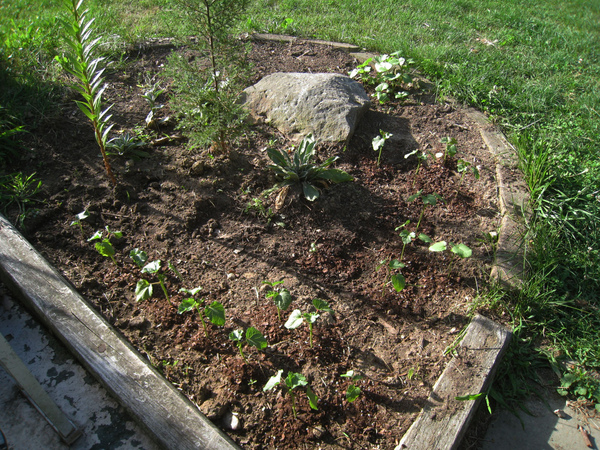 翻土闢了一個菜園-1.jpg