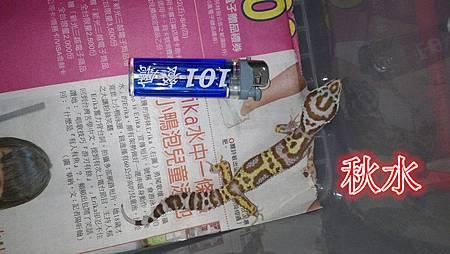 秋水_副本