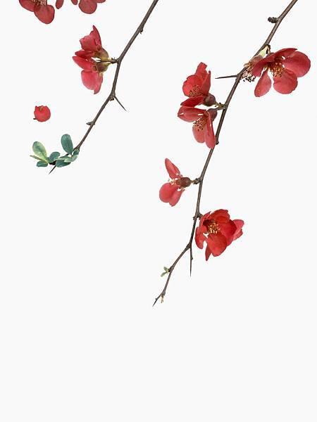 han-chenxu-543979-unsplash.jpg
