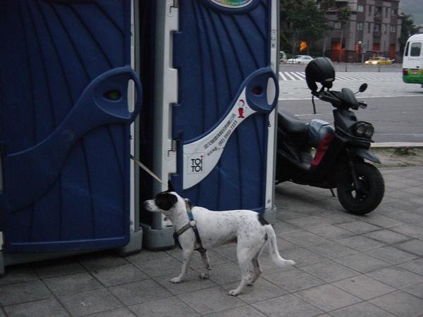 被牽著的狗兒,不知道是不是尷尬,當時牠超想離開的