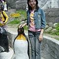 感覺企鵝好像昂首給baby摸