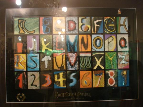蝴蝶字母&數字