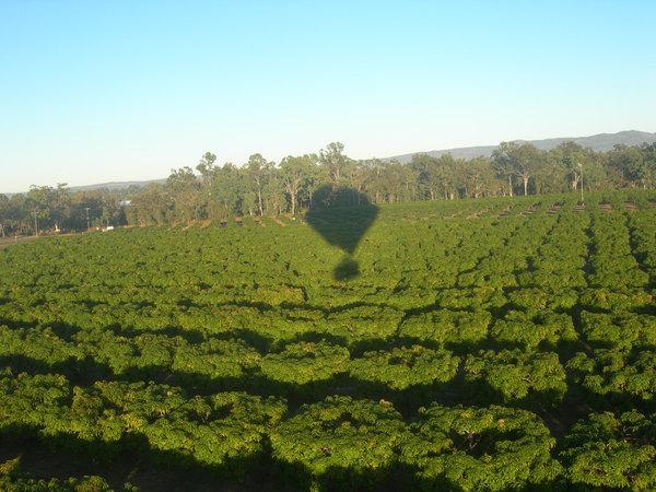 我們被迫降在一大片芒果田裡