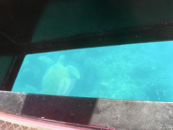 隱約的海龜背影
