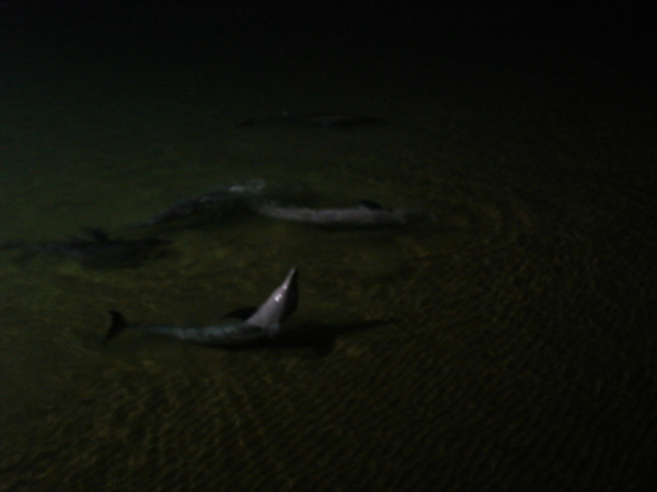 海豚抬頭 :)