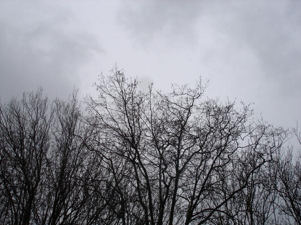 我喜歡這種乾樹