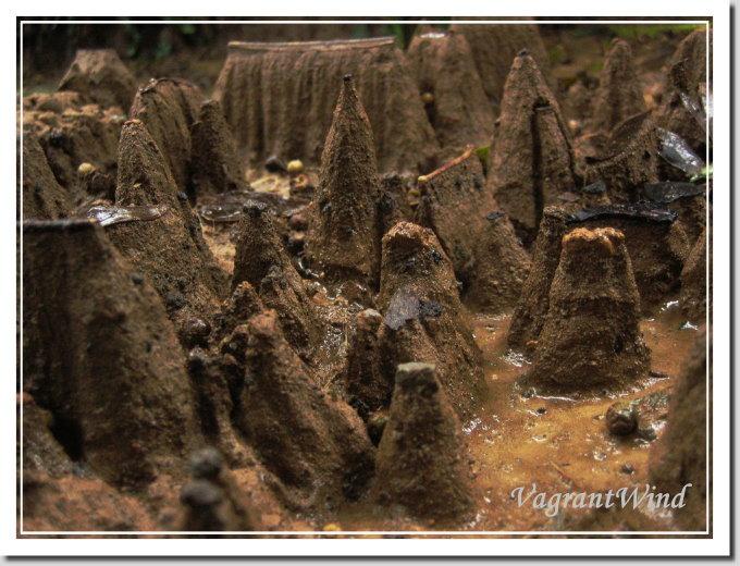 20050226--小粗坑--土筍
