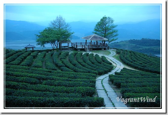 20050404--玉蘭茶園