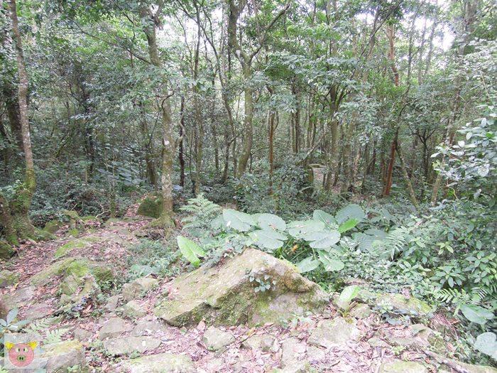 樂哈山091.JPG
