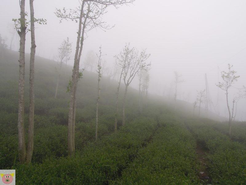 文景露營133.JPG