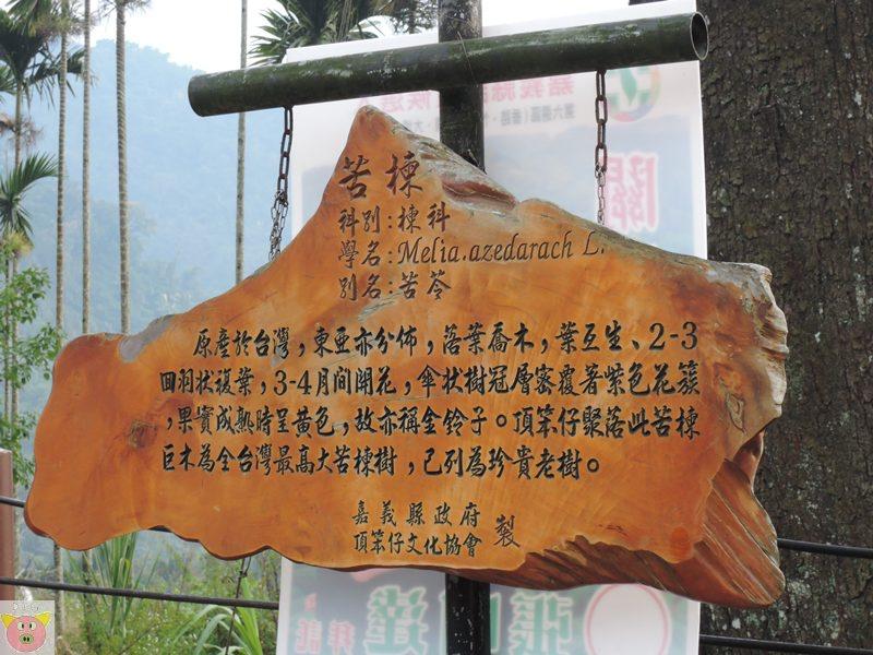 湘泉露營160.JPG