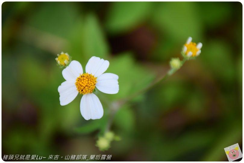 蘭后露營DSC_0601 (42).JPG