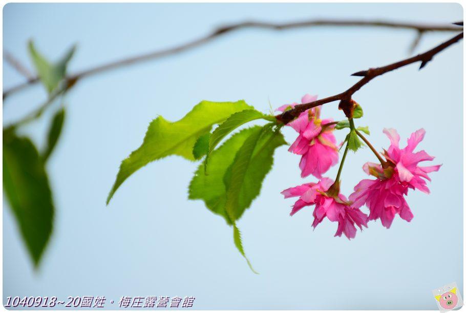 梅庄DSC_5891.JPG