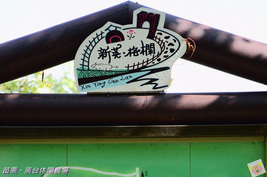 英台露營DSC_9948.JPG
