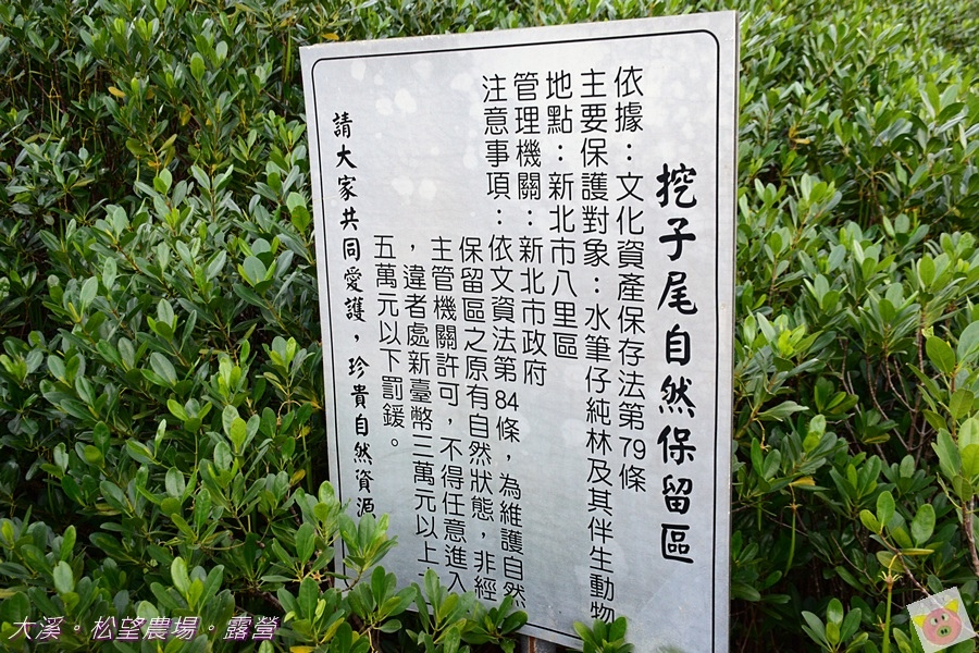 松望農場露營DSC_3039.JPG