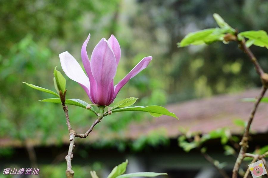 福山緣DSC_8052-065.JPG