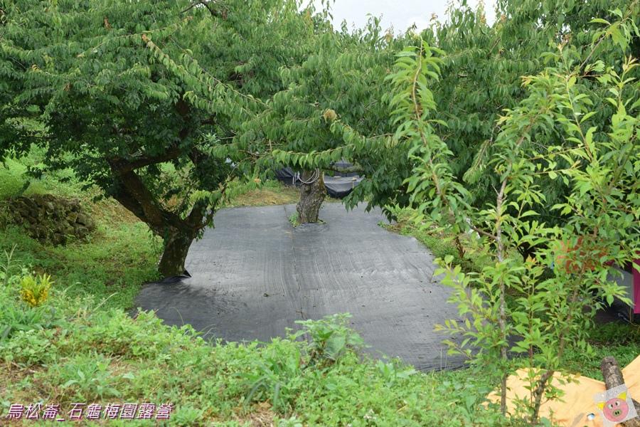 石龜梅園DSC_0199.JPG