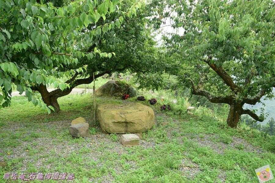 石龜梅園DSC_0212.JPG