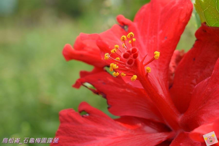 石龜梅園DSC_0280.JPG
