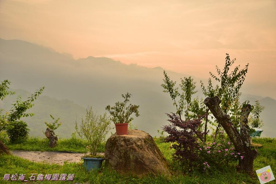 石龜梅園DSC_0385.JPG
