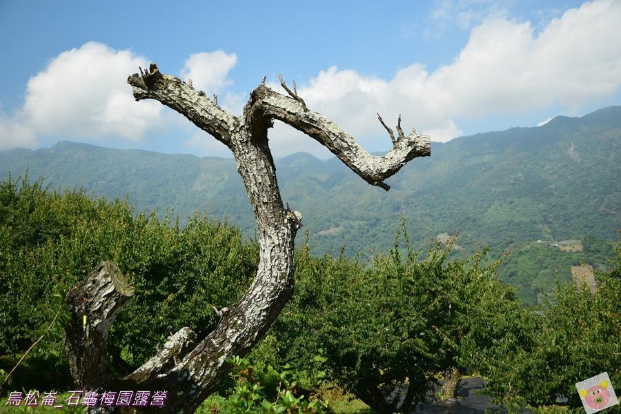 石龜梅園DSC_0469.JPG