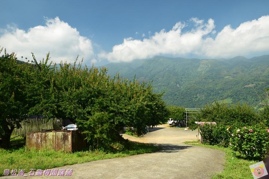 石龜梅園DSC_0476.JPG
