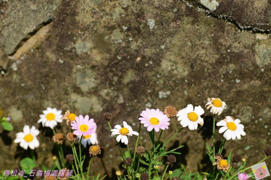 石龜梅園DSC_0566.JPG