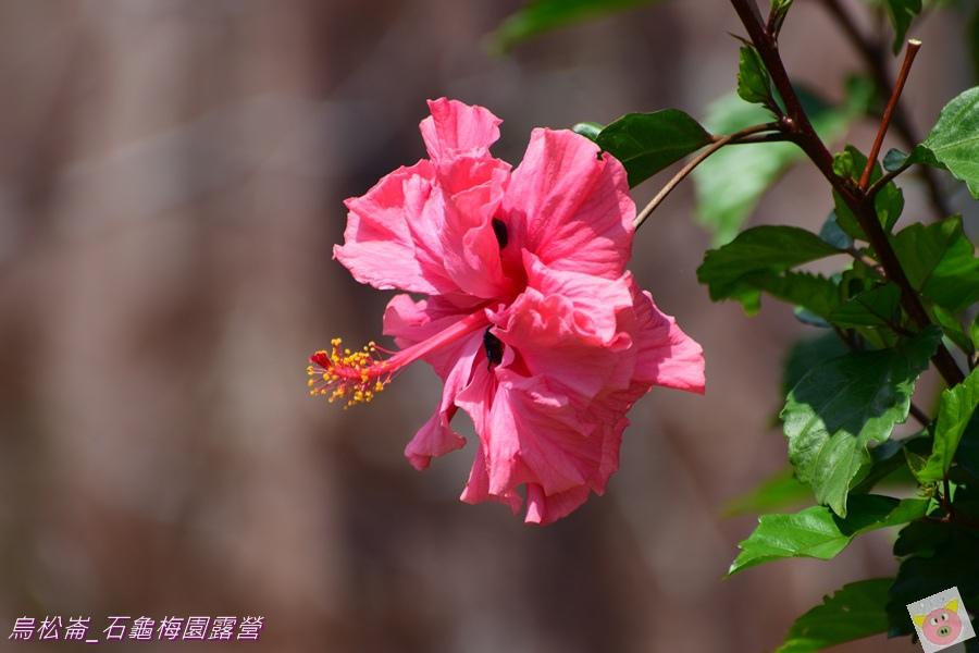 石龜梅園DSC_0576.JPG