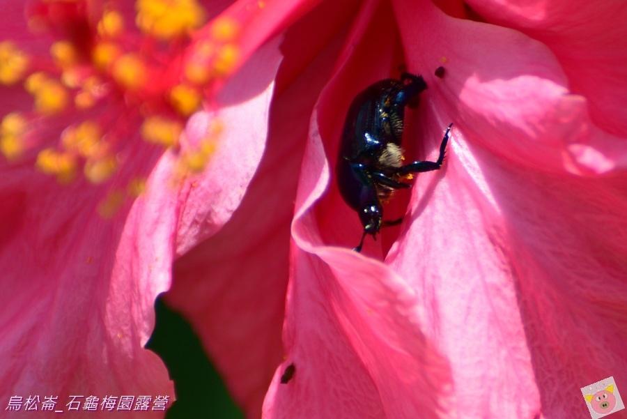 石龜梅園DSC_0578.JPG