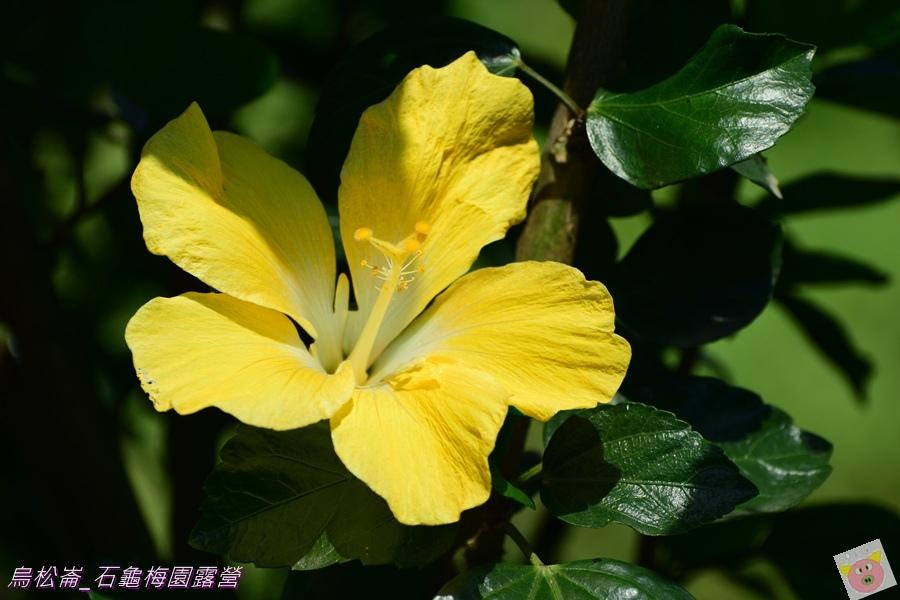 石龜梅園DSC_0580.JPG