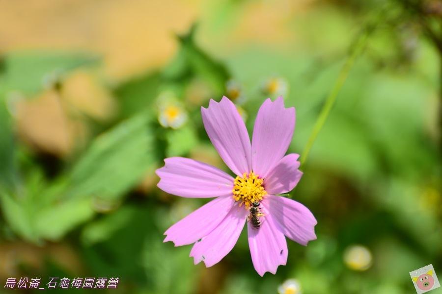 石龜梅園DSC_0605.JPG