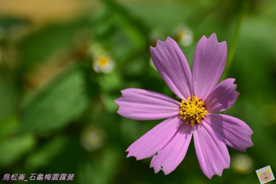 石龜梅園DSC_0613.JPG