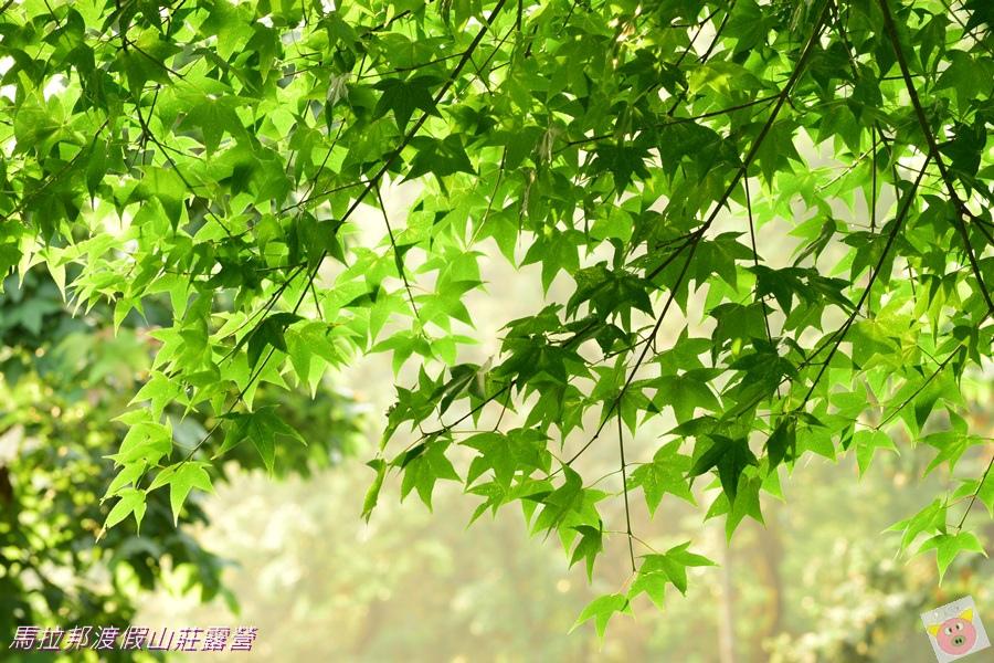 馬拉邦DSC_0924.JPG