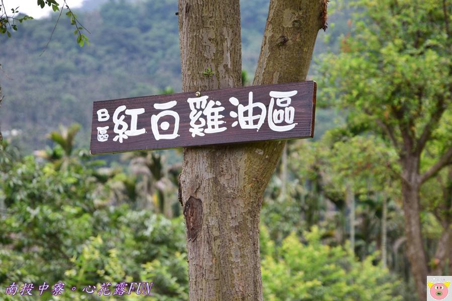 心花露FUNDSC_1726.JPG