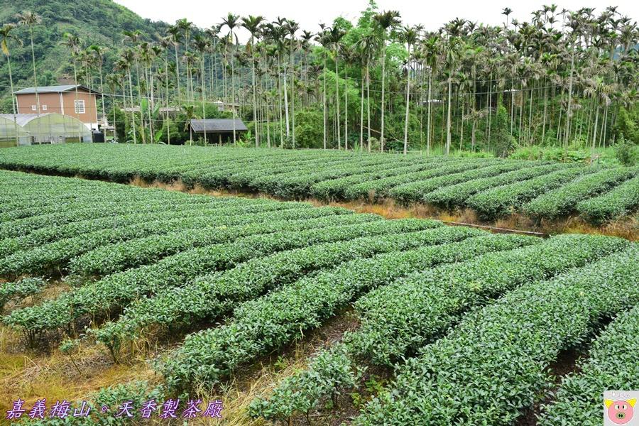 天香製茶廠DSC_2004.JPG