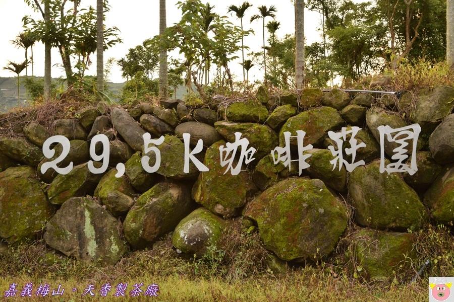 天香製茶廠DSC_2020.JPG